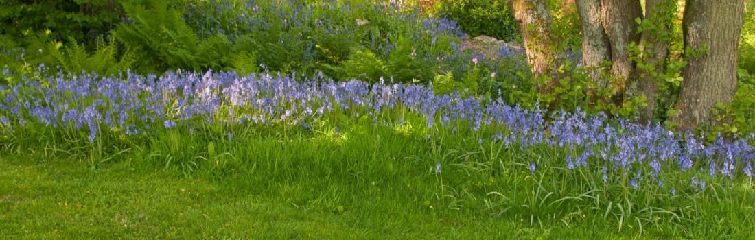 Burrow-Farm-Gardens-Visit-Devon-Holiday-South-west-Axminster-18-Copy-1100x350