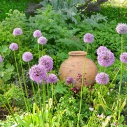 Burrow-Farm-Gardens-1-Rose-Garden-Medium-1024x681