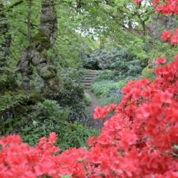 Burrow-Farm-Gardens-18-Woodland-Garden-Medium-681x1024