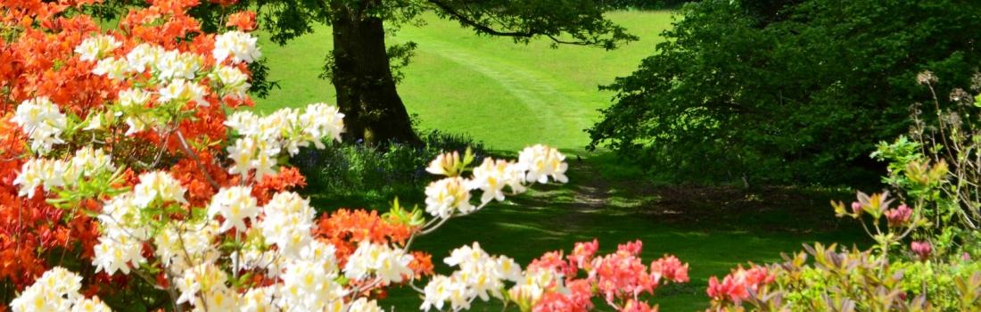 Burrow-Farm-Gardens-Visit-Devon-Holiday-South-west-Axminster-21-Copy-1100x350